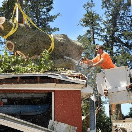 Next Steps after Hurricane Damage