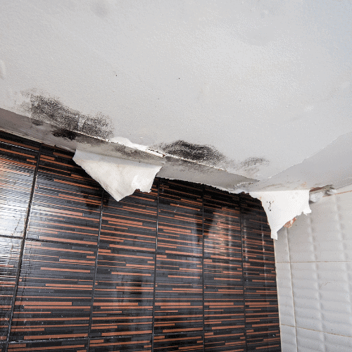 mold after a storm or flood